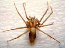 Spiders Pest Control Canada