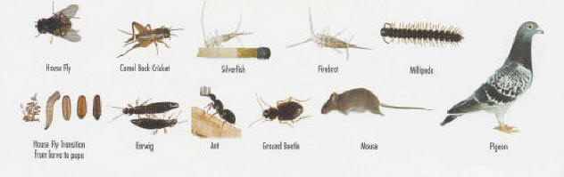 Household Pests Common Household Pests In Ontario