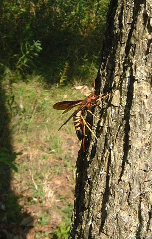 Nye insekter i danmark?