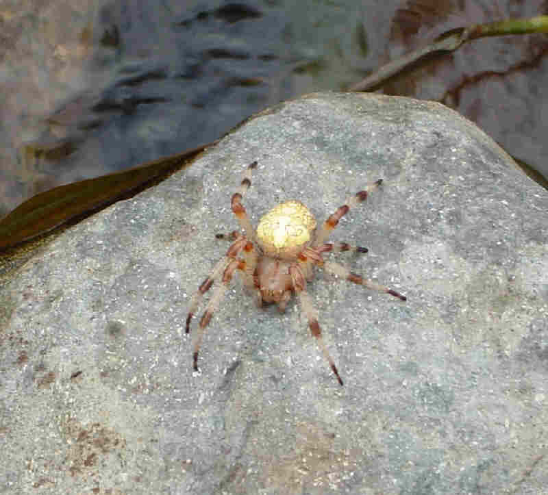 Canada Spider Identification Chart http://www.pestcontrolcanada.com/Questions/spider_identification.htm