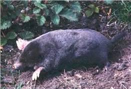 Moles Pest Control Canada