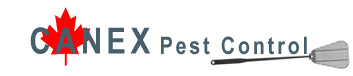 Advantage Pest Control Toronto